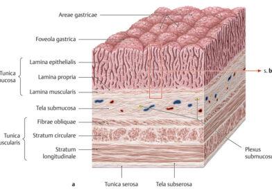 Anatómia – Szövetek
