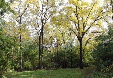 A Sóstói erdő